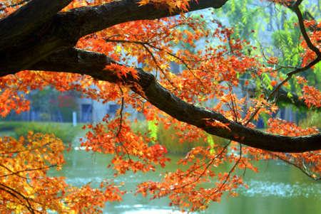 Autumn foliage in Nishinomiya