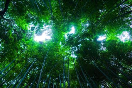 An upward perspective shot of a bamboo forest in Arashiyama, Japan