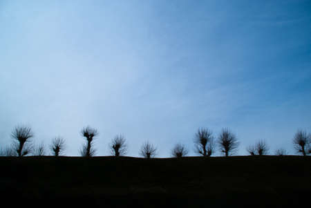 A row of skeletal trees silhouetted against a blue sky at dusk Stock Photo