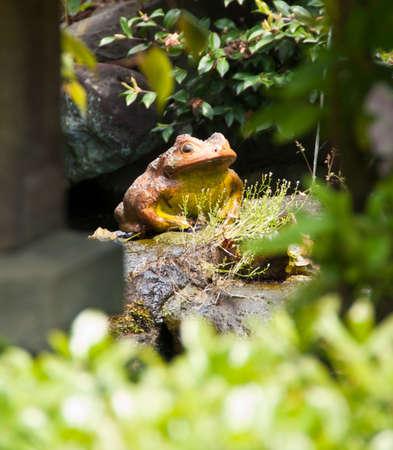 An ornamental stone frog in a lush green garden