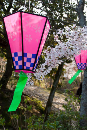 Two pink lanterns among the cherry blossoms at a festival in Japan photo