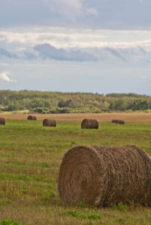 A hay bale sits in a field at right of frame with hay bales and cloudy sky in the background
