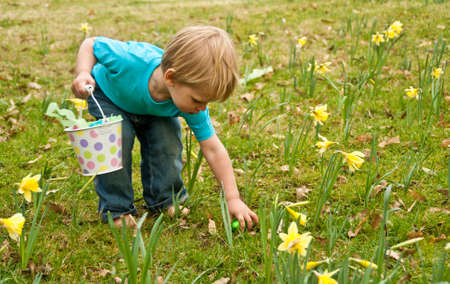 A toddler on an Easter egg hunt picks up an egg in the daffodils