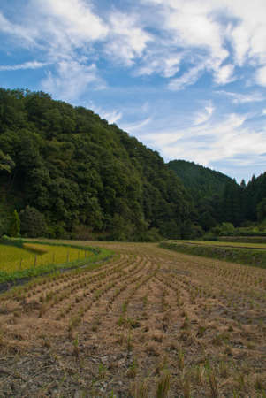 A recently-harvested rice field in rural Japan