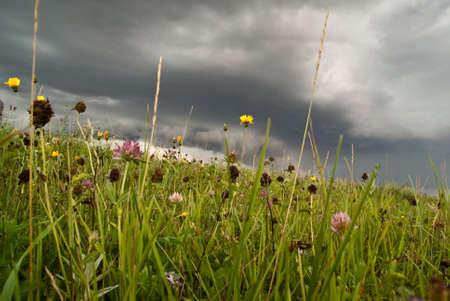 Wildflowers against a background of stormy prairie skies