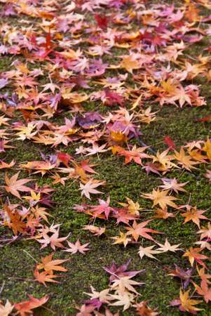 A carpet of fallen colorful fall leaves