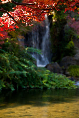 Red Japanese maple tree against a waterfall background