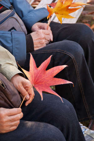 People holding and waving autumnal maple leaves