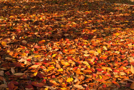 A background of colorful fallen autumnal leaves Stock Photo
