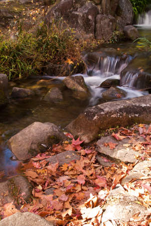 Fallen leaves next to a small waterfall Stock Photo