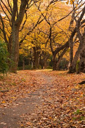 An autumnal park scene Stock Photo