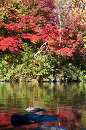Japanese pond and fall foliage