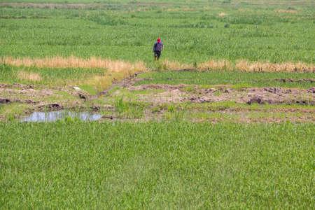 pesticide: Farmer Spray pesticide Stock Photo
