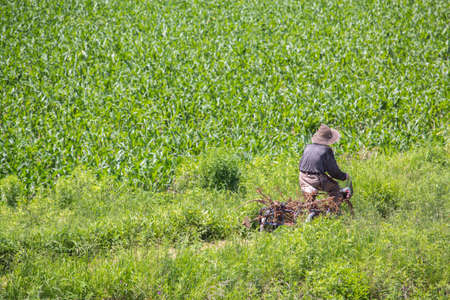 get tired: Farmer  doing plantation work Stock Photo