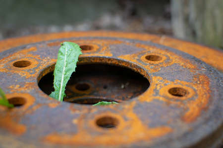 A closeup of a rusty metal disc brake rotor on the ground with a green weed growing up through it. Фото со стока - 115783467