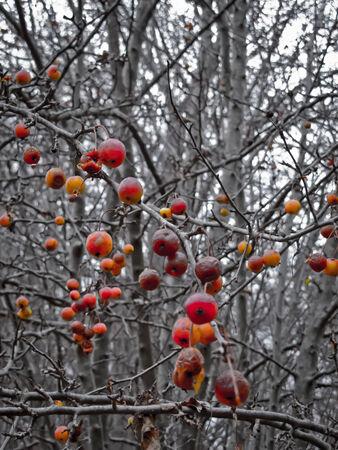 Not so tempting cherries