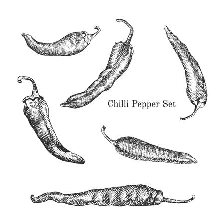 ustawić Chilli Peppers szkice tuszem. Kontur stylu konspektu Ilustracja
