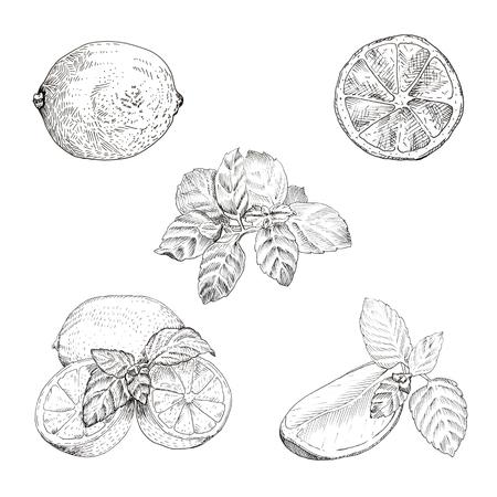 Limoen en munt inktschets ingesteld. Geïsoleerde design elementen Vector Illustratie