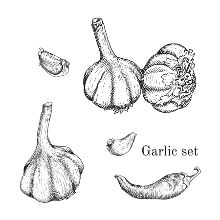 Garlic ink sketches set. Contour outline style