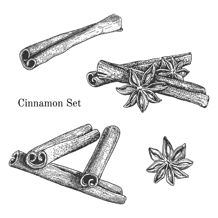 anise star: Ink hand drawn cinnamon set. Engraving outline traditional style.