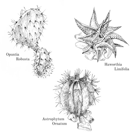 dry flowers: Cacti and succulent ink sketch set. Isolated. Hand drawn outline style.
