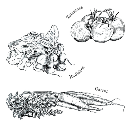 raddish: Hand drawn vegetables ink sketches set. Isolated carrot, raddish, tomatoes