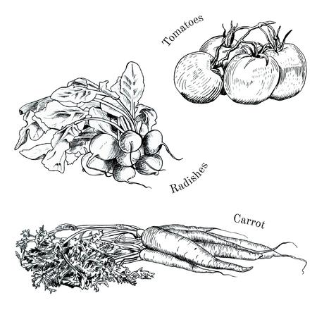 Hand getrokken groenten inktschetsen ingesteld. Geïsoleerde wortel, raddish, tomaten Stock Illustratie