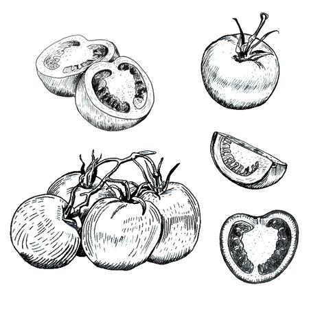 old fashioned vegetables: Hand drawn ink tomatoes sketches set. Outline retro style. Isolated Illustration