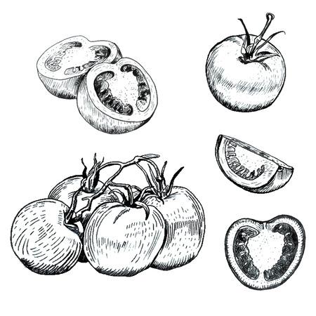 ustawić ręcznie rysowane szkice tuszem pomidory. Drzewo stylu retro. Odosobniony