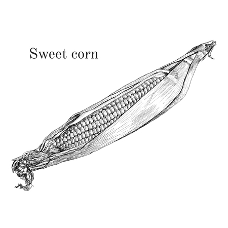 Sweet corn ink sketch. Classic outline style. Isolated vector illustration.