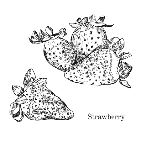 Hand drawn strawberry ink sketch. Isolated. Contour style Çizim