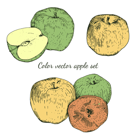 foreshortening: Hand drawn color vector apple sketches set. Journal style. Isolated. Easy to use for different design of menu, advertisement, cafe etc Illustration