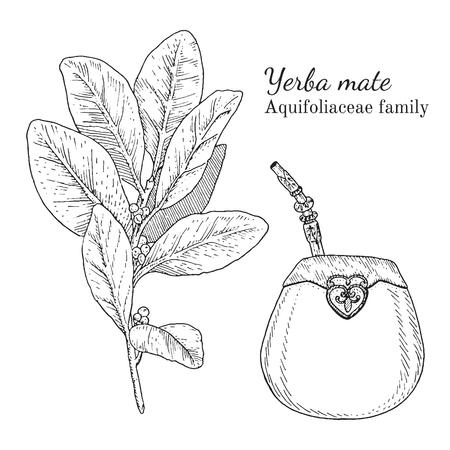 Inkt yerba mate kruiden illustratie. Hand getrokken botanische schetsstijl. Absoluut vector. Goed voor gebruik in verpakkingen - thee, geschikt, olie enz. - en andere toepassingen Stock Illustratie