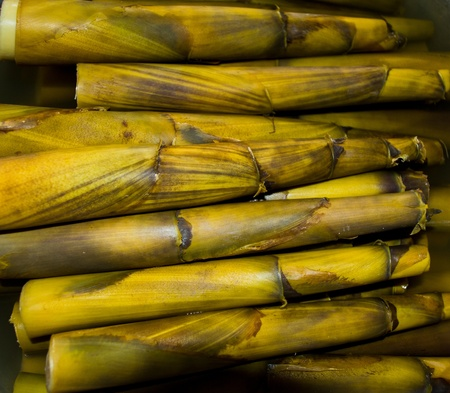Edible bamboo is a tree that naturally, people use the plant to use for different appliances or cooking the sprouts Stock Photo - 9777943
