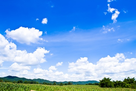 Sky with corn and green leaves.