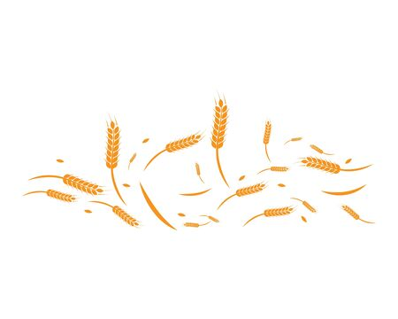 Agriculture wheat background Template vector