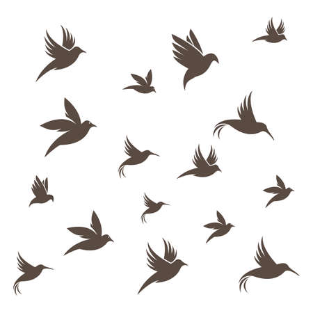 Bird background Template vector illustration