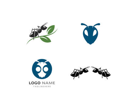 Ant   template vector illustration design