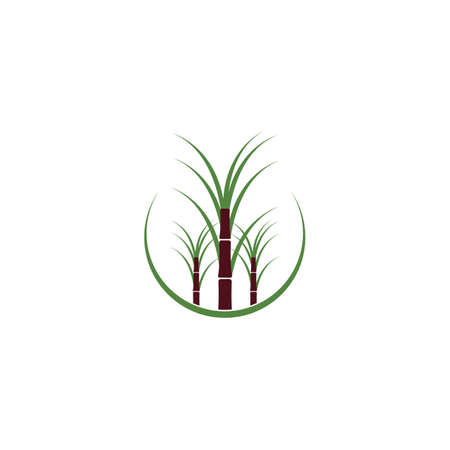 Sugar cane plant logo vector illustration design