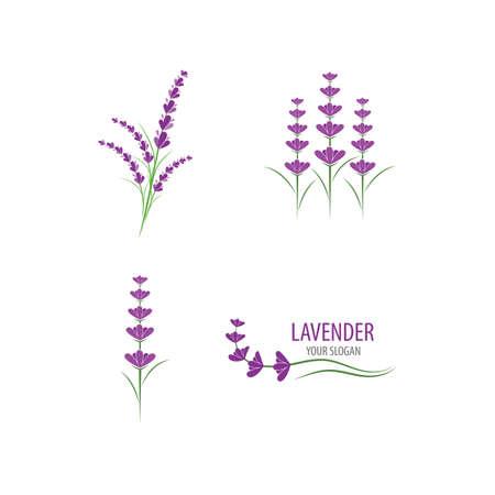 Fresh Lavender flower vector flat design