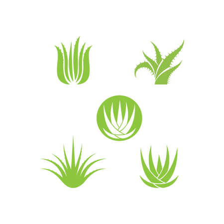 Aloe vera vector ilustration template Çizim