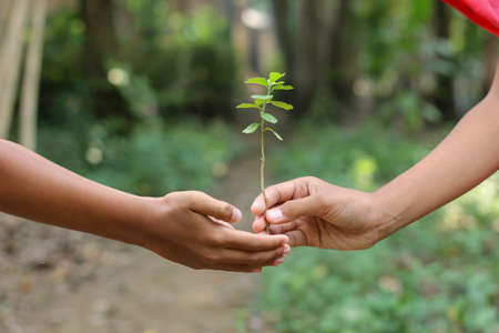 children's Hand with green tree, nature care concept