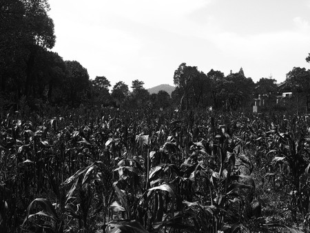 Black and white nature landscape view