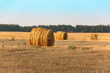 haymow: Cylindrical haystack.
