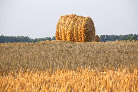 haymow: hay packing Stock Photo