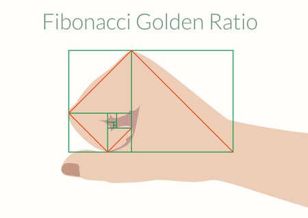 Human hand Fibonacci Ratio.