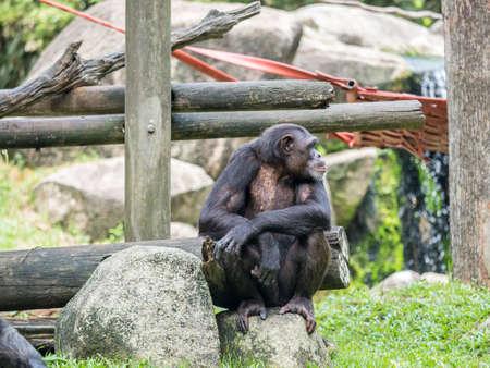 close up of a chimpanzee