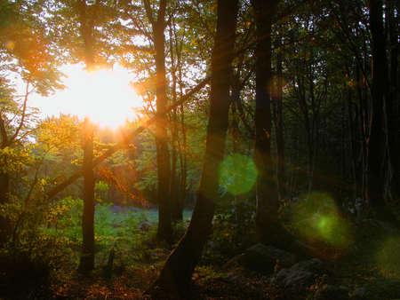 shafts: Sonnenaufgang in der Buche Lizenzfreie Bilder