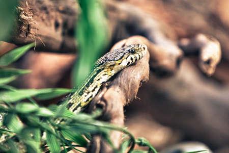vivarium: Snake