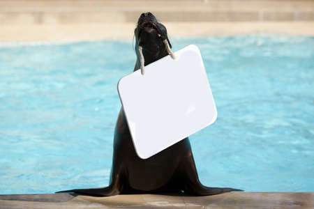 addresses: Sea lion addresses to you Stock Photo